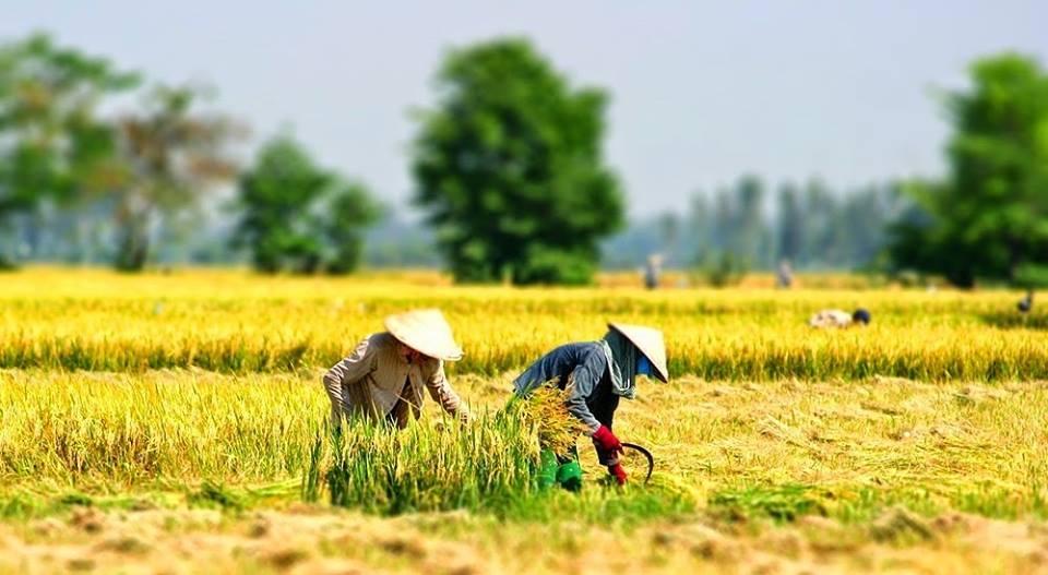 Quang Nam photo.jpg